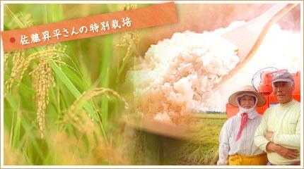 佐藤昇平さんの特別栽培