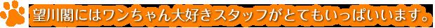 望川閣にはワンちゃん大好きスタッフがとてもいっぱいいます。